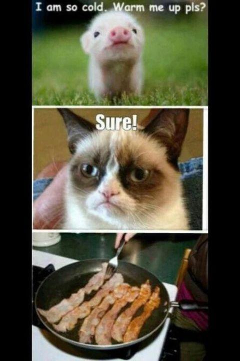 Funny Grumpy Cat Memes More Bacon Wattpad See more about meme, grumpy cat and cat. funny grumpy cat memes more bacon