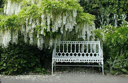 """""""Y-""""ok!""""you want to a little place with a bench and a tree with pretty white flowers"""