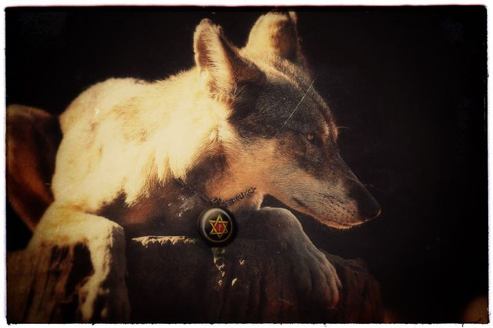 A red wolf soul, guardian of Caleb Havard