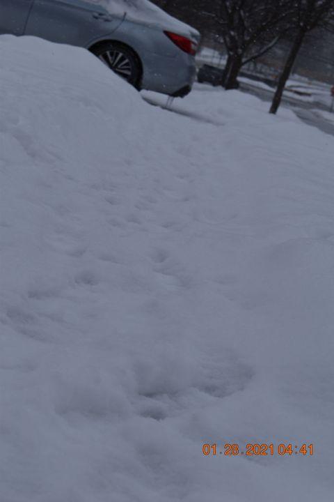 #1 Winter Footsteps