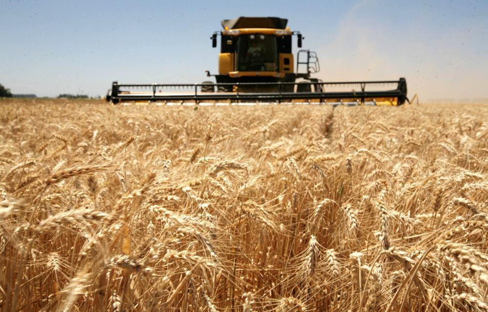 Na agricultura, o país se destaca na produção de diversos cereais e azeites, com maior evidência para o trigo, principal produto