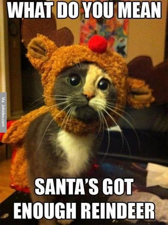 Funny Memes Gifs Merry Christmas 32 Wattpad Have a really great time this christmas season with this funny santa meme collection. funny memes gifs merry christmas