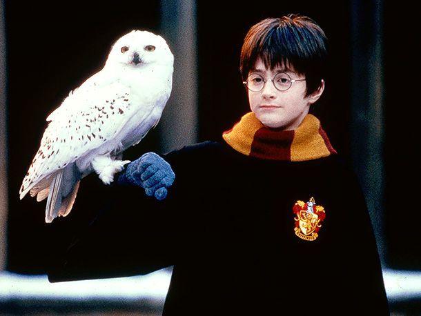 Harry Potter Fehler Unlogisches Fakten Und Tatsachen Hedwig Wattpad