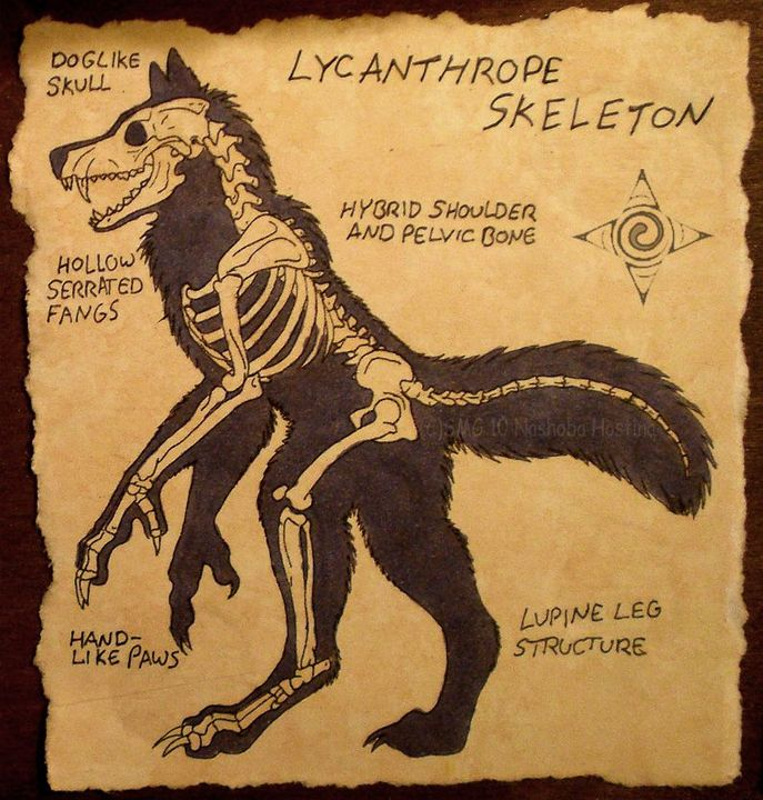The lycanthropy universe arc is a very common and widely used omegaverse arc as it involves human/wolf hybrids and no others