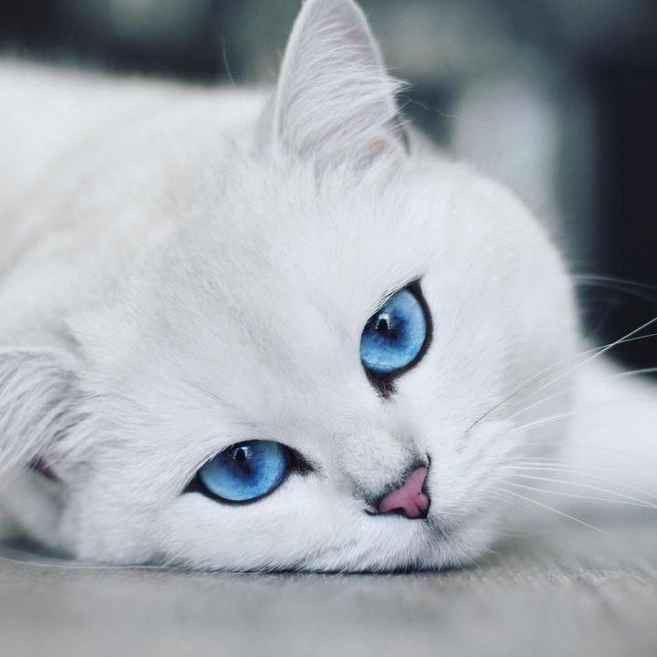 """""""Sao mình lại biến thành mèo rồi"""" Bỗng từ trên trời rơi xuống 1 bức thư cô mở ra đọc trong đó ghi là : """" Xin chào con vì 1 lần sai lầm hắc xì nên ta đã lỡ gạch tên con trong sổ sinh tử nên ta đã cho con chuyển sinh thế giới DxD mà con mới xem xong"""