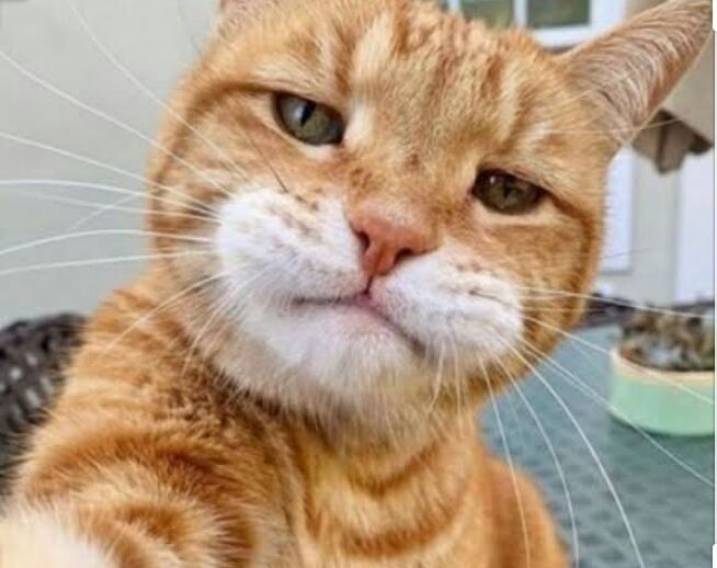 Kucing Oren Biodata Lengkap Wattpad
