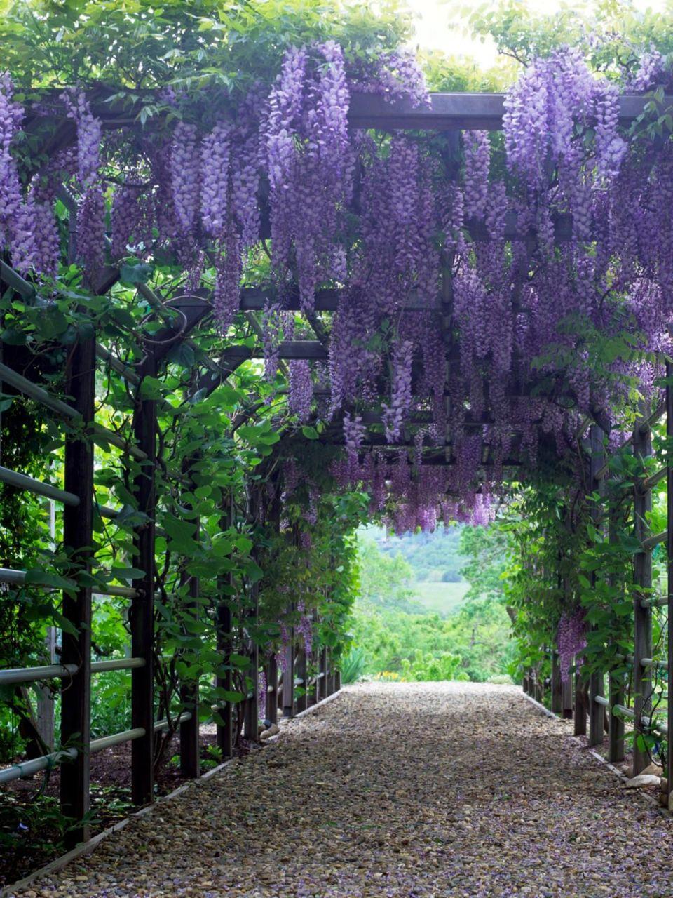Lucca me levou por uma pequena estrada de pedras batidas, as árvores com folhas densas faziam uma grande sombra em todo o caminho