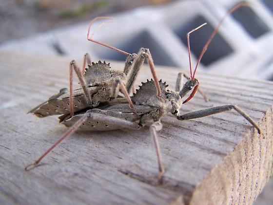 rovarok eszik pénisz