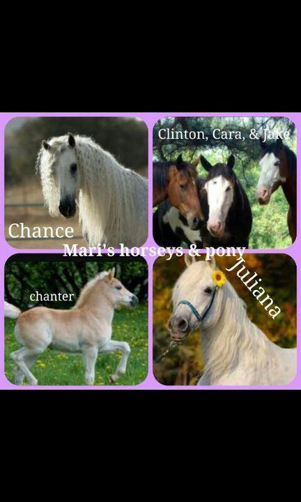 I named the three girl horseys Chance, Cara, And Juliana, the the boy horses Clinton and Jake