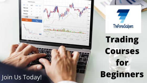 Forex trading learning course forex profit seekers