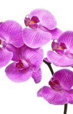 Orkidèn av lowize