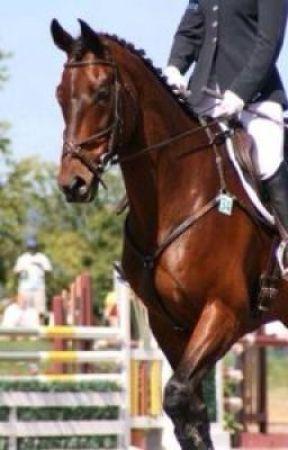 High Hopes - An Equestrian saga by Showjumping17