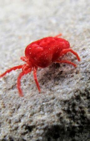 Species Adaptation by DavidNadas