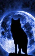 Midnight- Der Ruf des Wolfs von SilverMoon0005