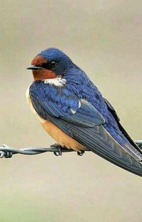 Barn Swallow Family  by hello_kinky_23