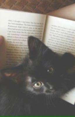 Đọc truyện  Meow của Hương