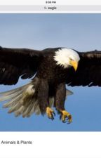 A Magnifecent Eagle by KateRylieReading