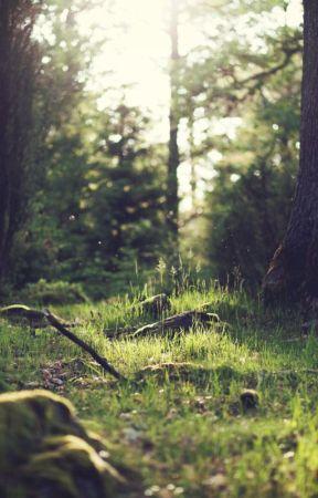 Never play in the woods  by AlyssaraeleeMIW