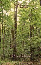 Bosc per NatsumiNiikura