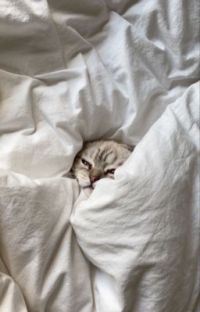 Harry Potter Instagram ✔️ cover