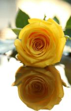 Наша жёлтая роза by uliana180992