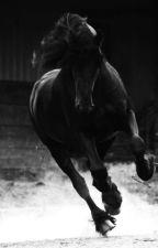 Apolo VII, el caballo misterioso by CARVEG3054