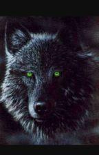 black wolf by Mysticalwarlock03