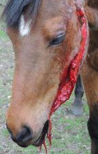 Konie zranione potrzebuące pomocy !!! by KamilkaPolak