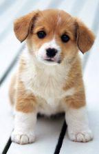 Bir küçük köpek by user74994208