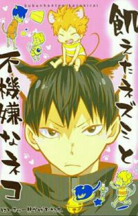 kagehina - Hungry mouse and grumpy cat - doujinshi cover