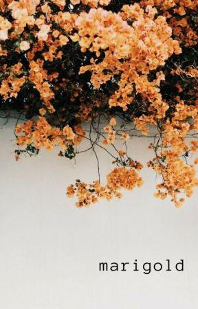 marigold by 4evacracra