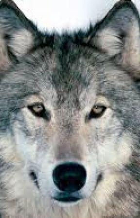 Best Werewolf Books by -FluentInSarcasm-