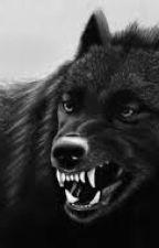 Pertemis en varg saga by werewolflovers33