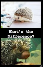 The Differences Between Hedgehogs and Porcupines by ReadWriteLiveMusic