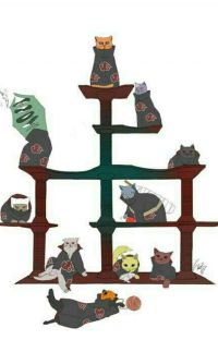 Akatsuki Back To Life As A Cat! cover