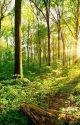 In die Wälder | ✨Abgebrochen✨ by Eisbluete_23