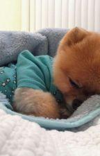 perrito lindo by dul895