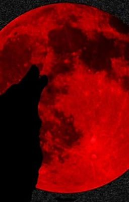 Đọc truyện Your Wolfman, My Vampire - Satzu