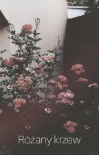 Różany krzew by littlesadgirlxx