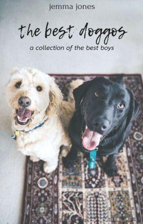 the best doggos by vanillayogurts