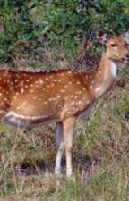 My deer therian by Noobieismyname