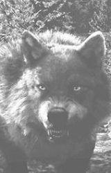 Vlkodlačí tábor [pozastaveno] by vlkwolf7