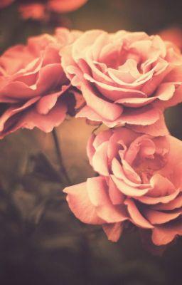 Đọc truyện [Hiện đại, lãng mạn] Ghost of a rose