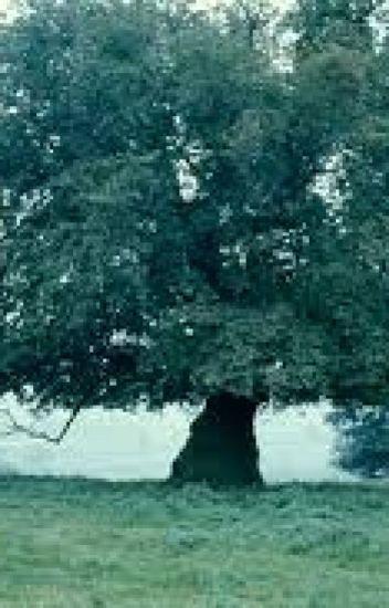 Mimpi Dibawah Pohon Ek (HIATUS)