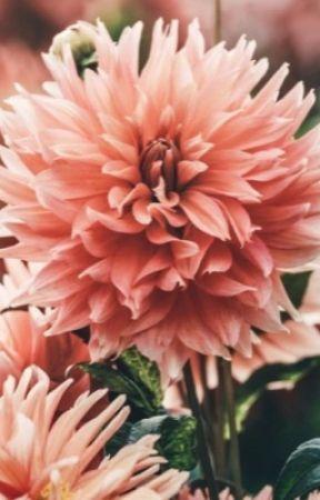 Love? {Lams vs Jamilton} by strawberry-peaches