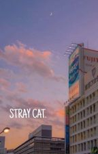 STRAY CAT. | SEUNGJIN by youwanttobangchan