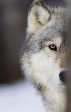 Die anderen Werwölfe! by werwolf_Love