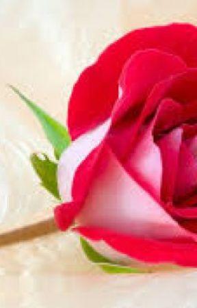 Cute Roses by Bonnie22_44