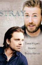 Stray (Steve Rogers XReader XBucky Barnes) by BrynnBarnes