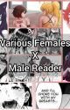 Various Females x Male Reader by